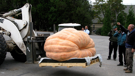 A forklift and pallet carry a giant Halloween pumpkin